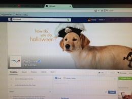 Pets FB