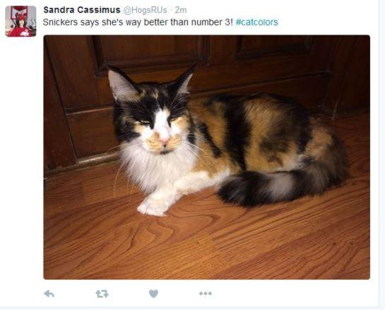 sandra-tweet